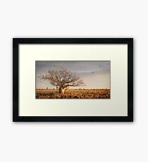 Beauty of the Boab Framed Print