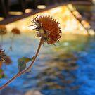 Arkansas Autumn Pod by Christine Ford