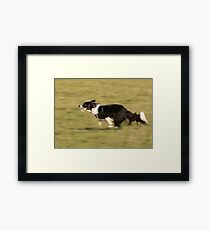 Border Collie at Speed Framed Print