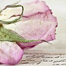 Vintage Paper Rose by Evelyn Flint
