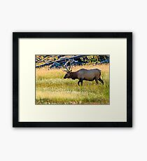Bull Elk at Yellowstone Framed Print