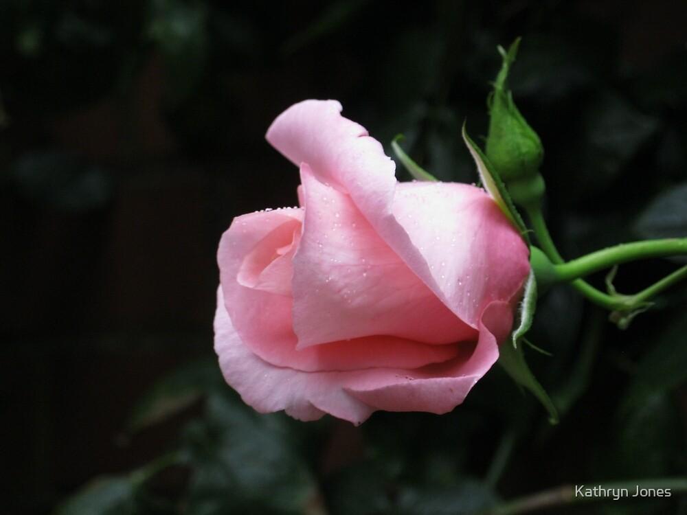 Sleeping Beauty - Dreamy Pink Rose by Kathryn Jones