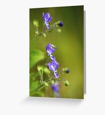 Forked Bluecurls Greeting Card