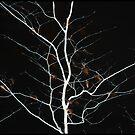 night fire tree by Dorit Fuhg
