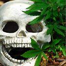 Happy Marijuana Skull  by Jason Pepe