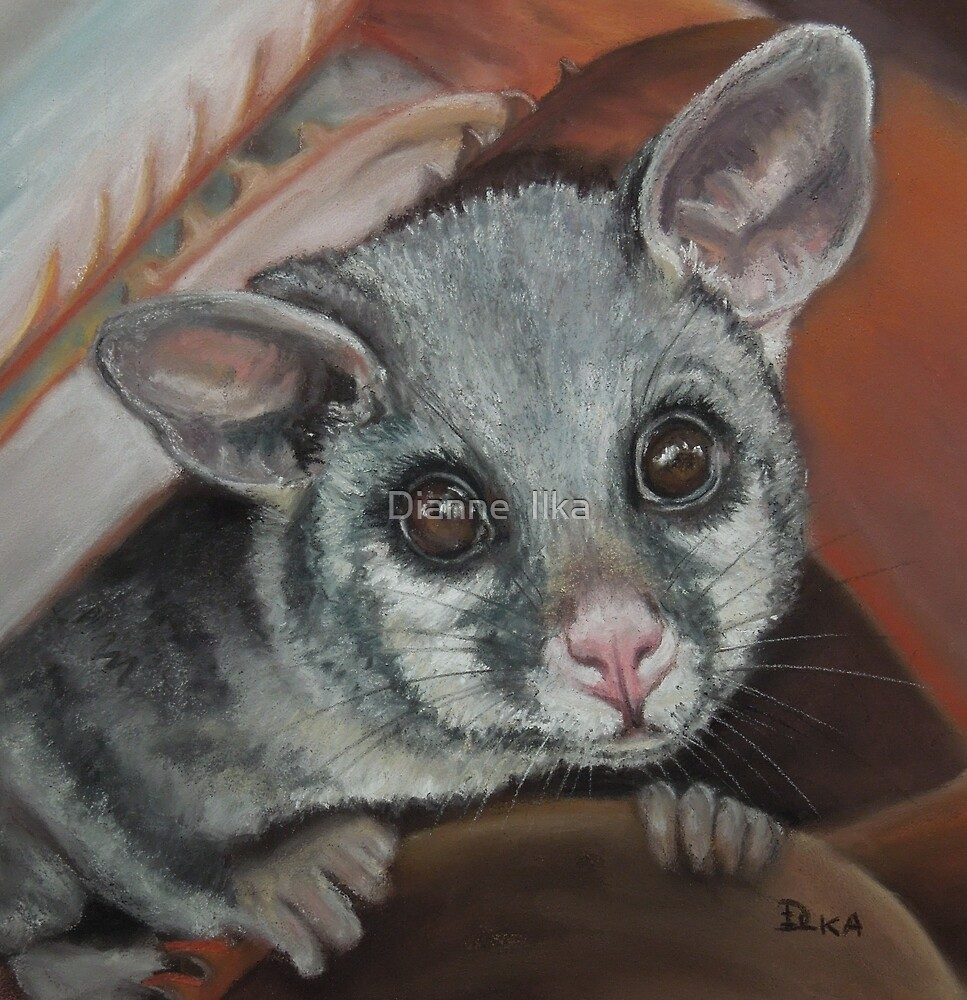 Hello Possum by Dianne  Ilka