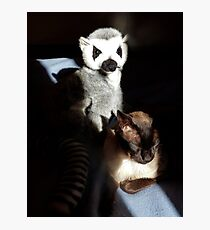 Tonkinese With Companion Photographic Print