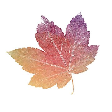 colorfull skeleton Leaf red by imfine