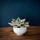 Still Life ~ succulent bowl by JoHammond