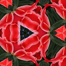 Kaleidoscope Geometry Patterns From Nature 1 by Kenneth Grzesik