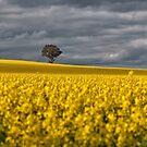Australia by SusanAdey