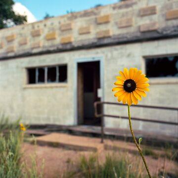 Glenrio Sunflower by DanielRegner