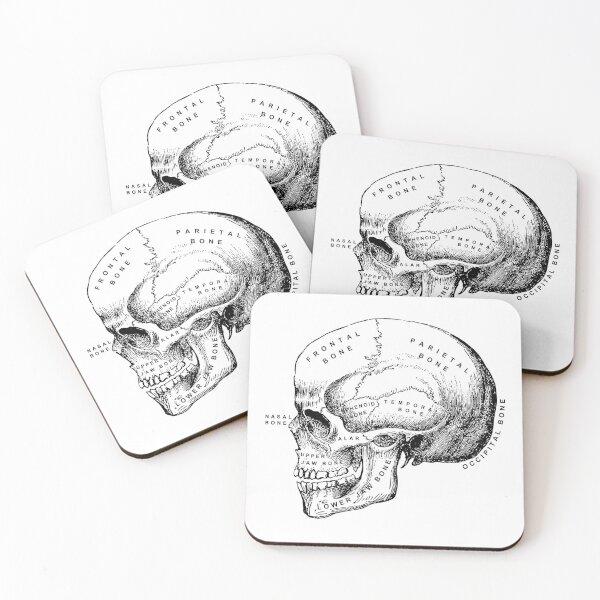 Anatomy Skull Coasters (Set of 4)
