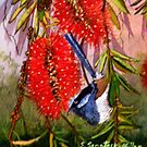 "Blue Wren  ""Wren's Chatter""  SOLD Brisbane by sandysartstudio"