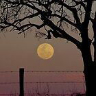 Country Supermoon by Penny Kittel
