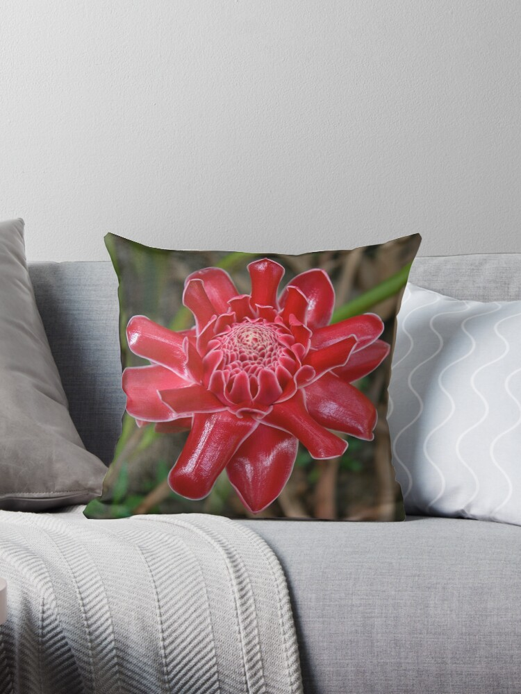 White-Tipped Red Torch Ginger Bloom by Kerryn Madsen-Pietsch