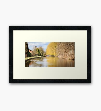 Willow on the Canal Framed Print