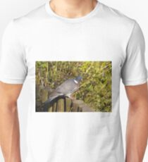 Wood Pigeon T-Shirt