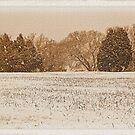 """Wide Country Christmas""... prints and products by Bob Hall©"