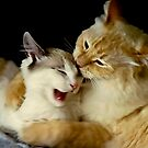 Grooming Time...Ouch!! by Heather Friedman