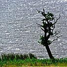 Twisted Tree, Lough Glencar, Leitrim, Republic of Ireland by Shulie1