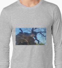 Walnut Shelf Fungal Conks T-Shirt