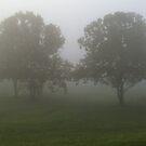 Misty Morning by zepfhyr