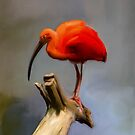 Red Bird with Long Beak by Kelly McKee