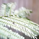 Fern Close Up by Kendra Kantor