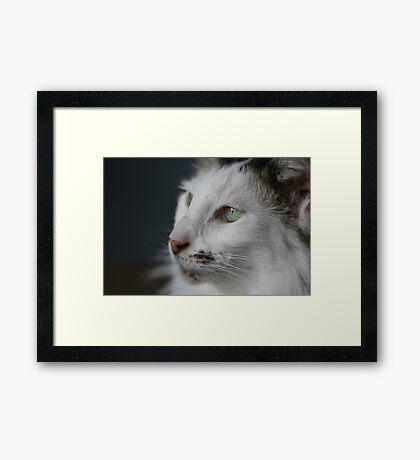 Cats Life Framed Print