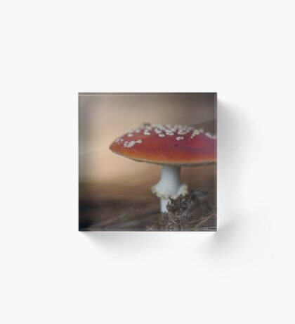 There is a fairy under the toadstool Acrylic Block