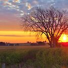 Oh, What A Beautiful Morning by lorilee
