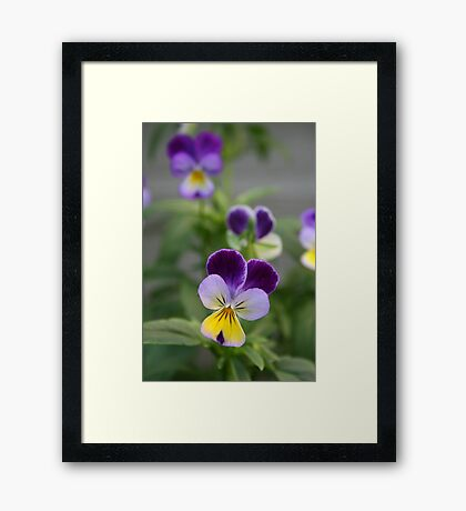 Don't Call Us Pansies Framed Print