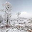 Glen Shiel Misty Winter Trees 2 by Grant Glendinning