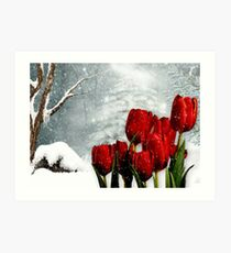 Winter Tulips Art Print