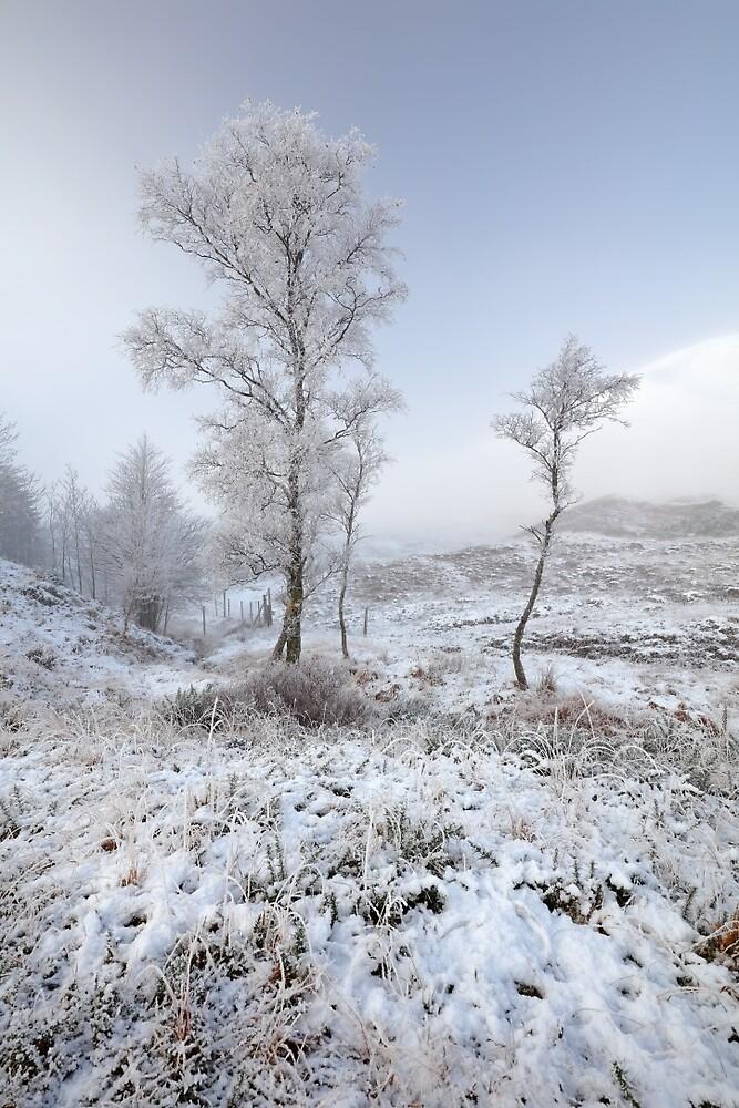 Glen Shiel Misty Winter Trees by Grant Glendinning