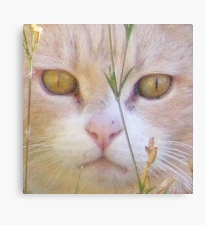 CC Creamy Cat Canvas Print