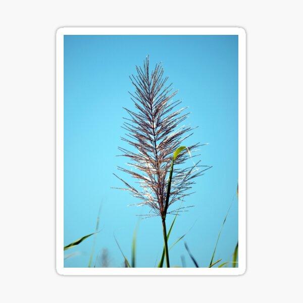SUGAR CANE FLOWER Sticker