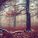 First Snow in Fall Woods by JennyRainbow