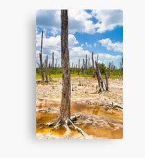 Intriguing Forest On The Yucatán Coast Near Celestún Mexico Canvas Print