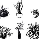 Assorted Houseplants by seasofstars