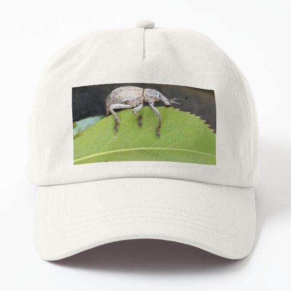 Weevil bug Dad Hat