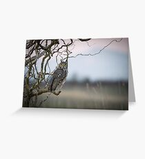Hunting Imminent -- Long-eared Owl Greeting Card