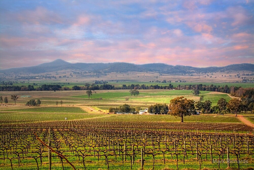 Denman Winery III - Near Muswellbrook, NSW by Mark Richards