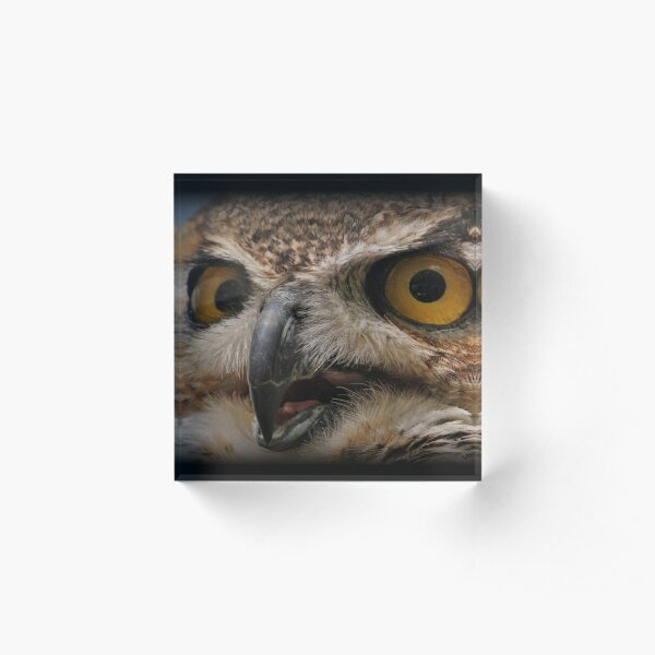Great Horned Owl Song Acrylic Block