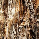 Paper Bark Tree by W E NIXON  PHOTOGRAPHY