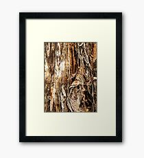 Paper Bark Tree Framed Print