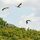 Birds in Flight,Wetlands near Cooktown by Michael Crameri
