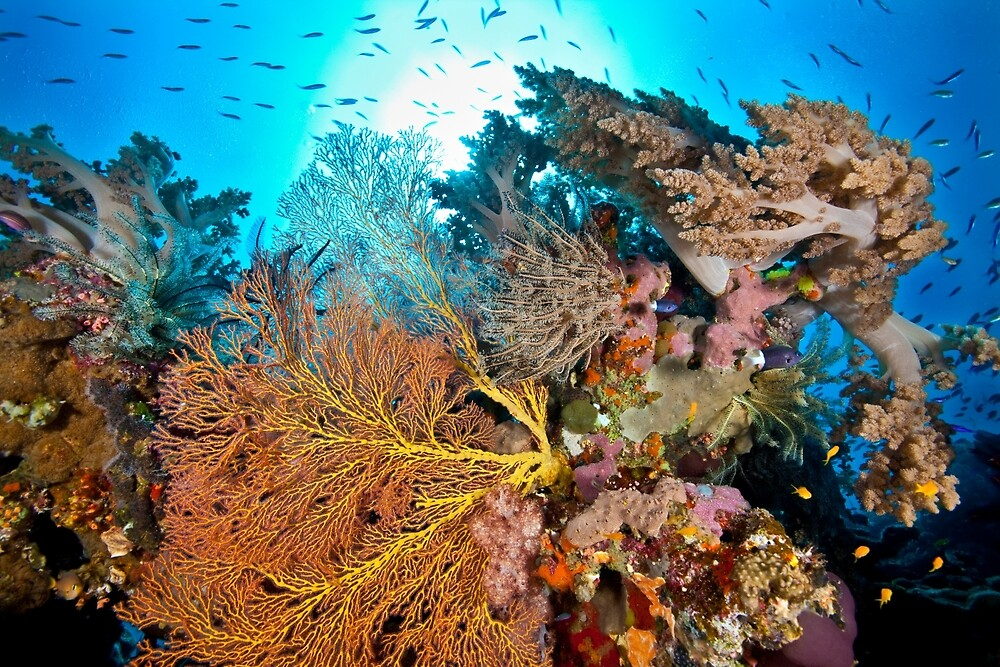 Soft coral tranquility by David Wachenfeld