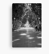 Hyde Park, Sydney Canvas Print